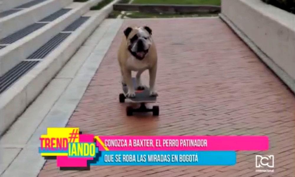 baxter-el-perro-patinador