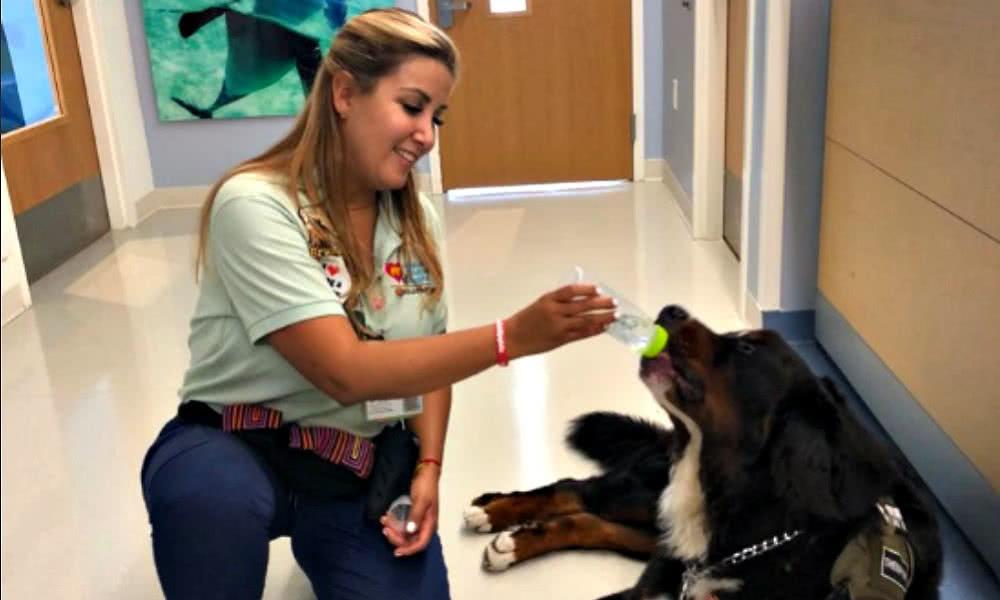 terapias-con-perros-para-ayudar-niños-con-complicaciones-salud