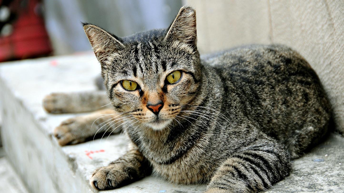 mitos-y-verdades-sobre-los-gatos.jpg