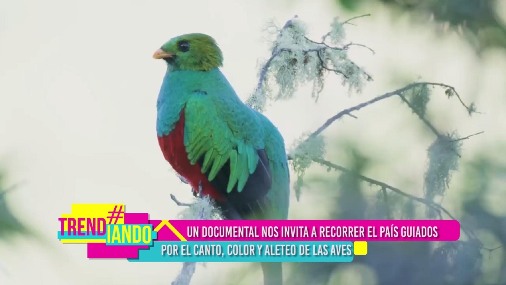 recorrido-por-colombia-a-traves-de-las-aves-.jpg