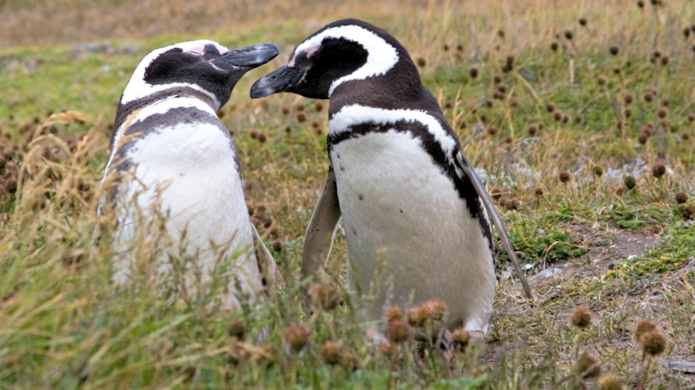 disneynature-pinguinos-documental.jpg