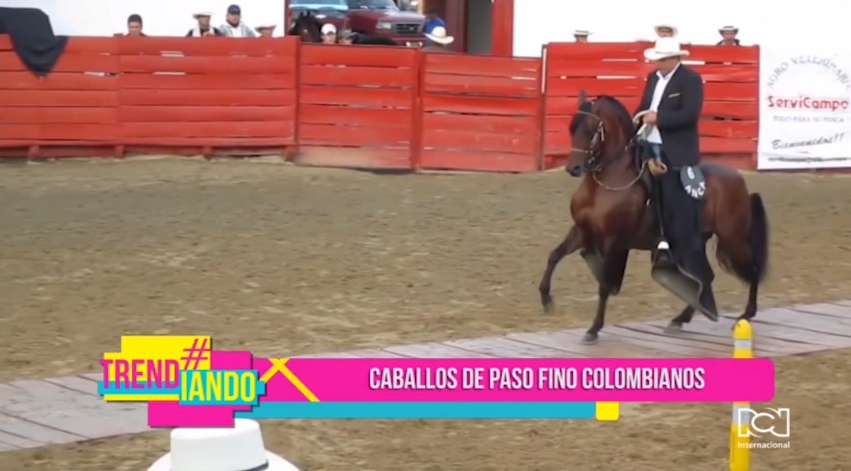 caballos-de-paso-fino-colombianos.jpg