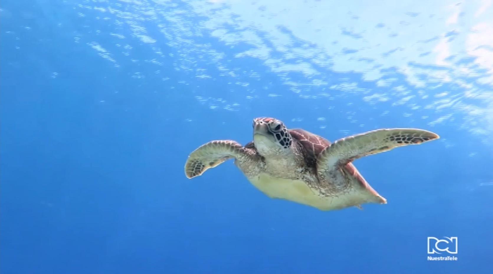 conservacion-de-tortugas-en-santa-marta.jpg