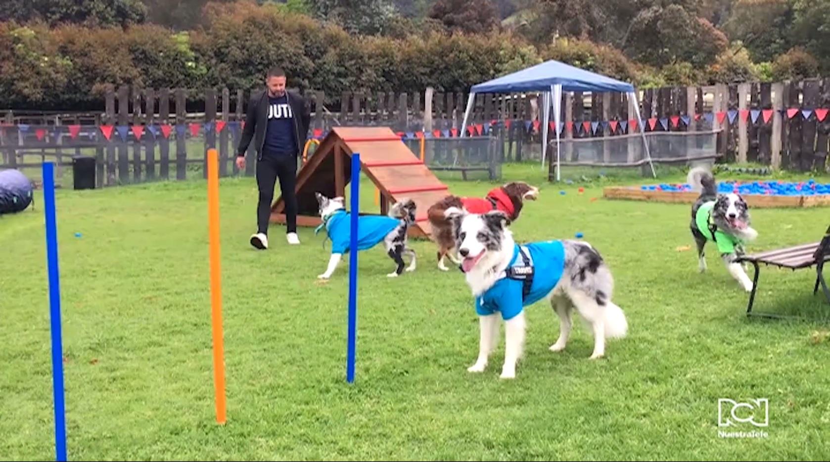 Ocico Dog Park: el parque de diversiones creado para que las personas disfruten al aire libre junto a sus mascotas