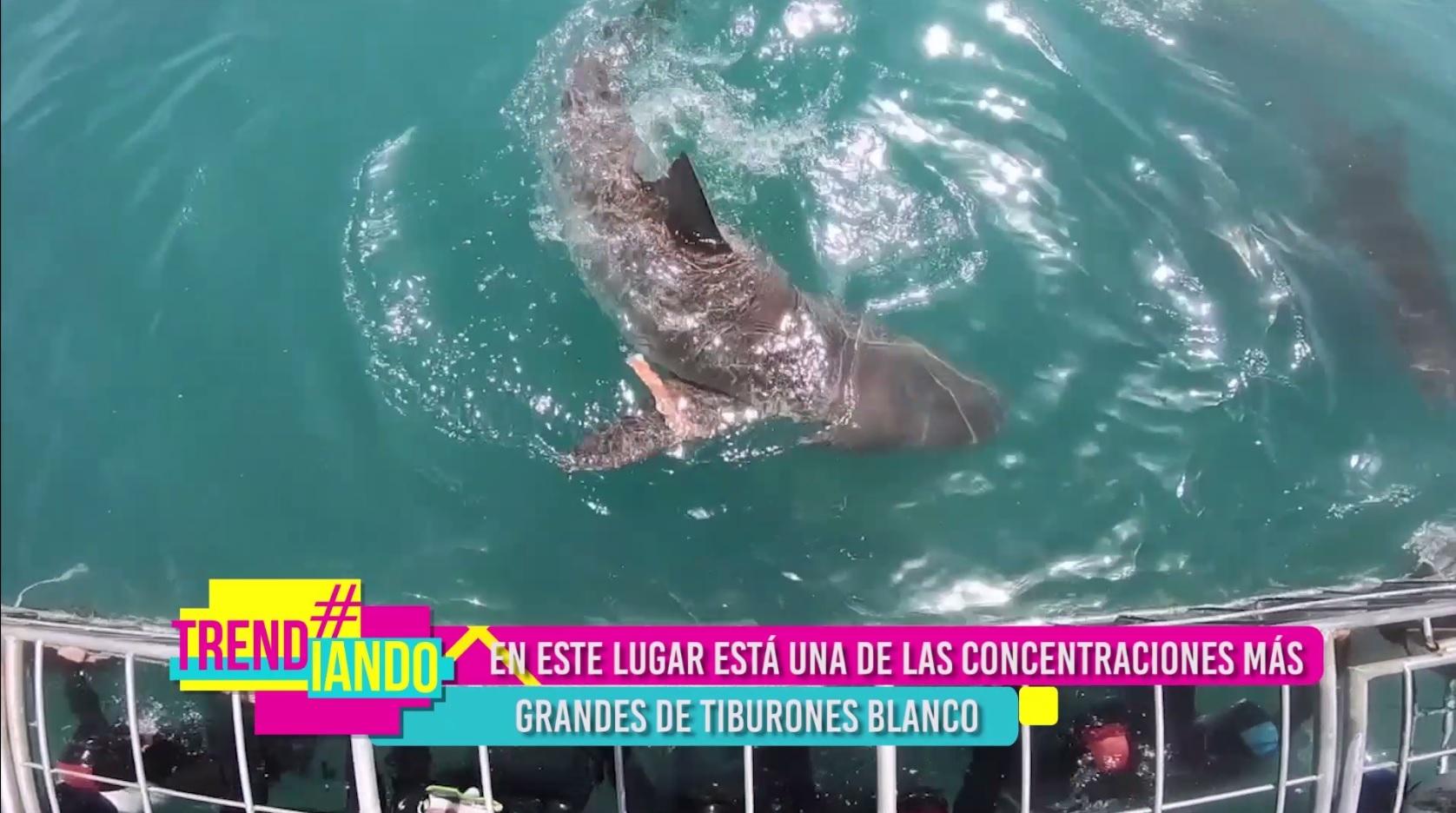 Catalina Robayo se le midió a sumergirse en aguas repletas de tiburones blancos
