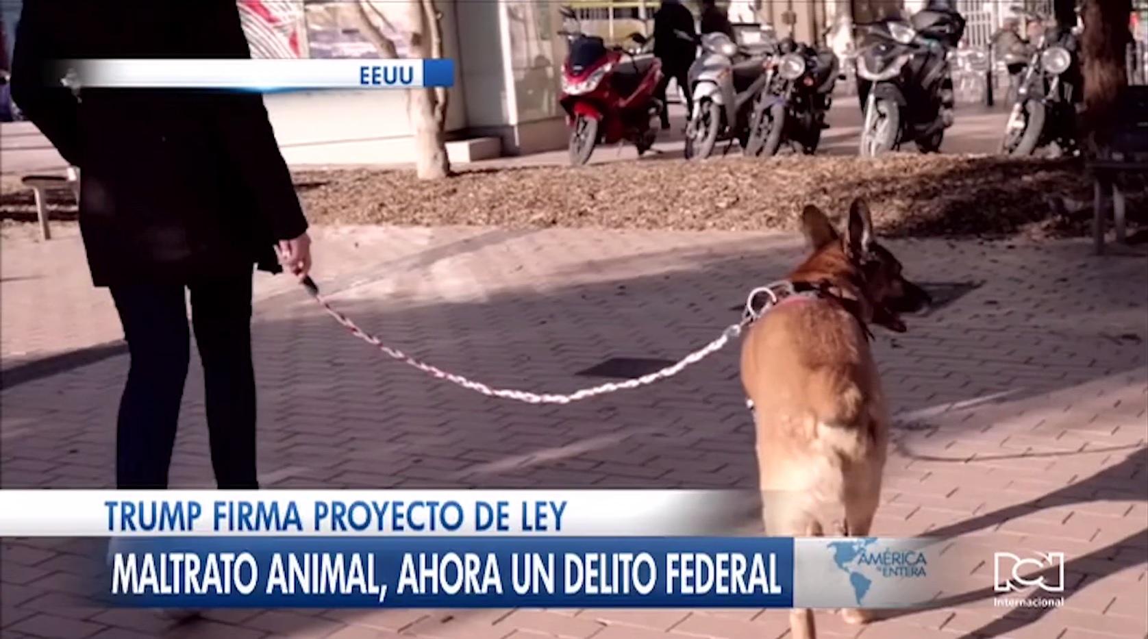 El maltrato animal ahora es un delito federal en Estados Unidos