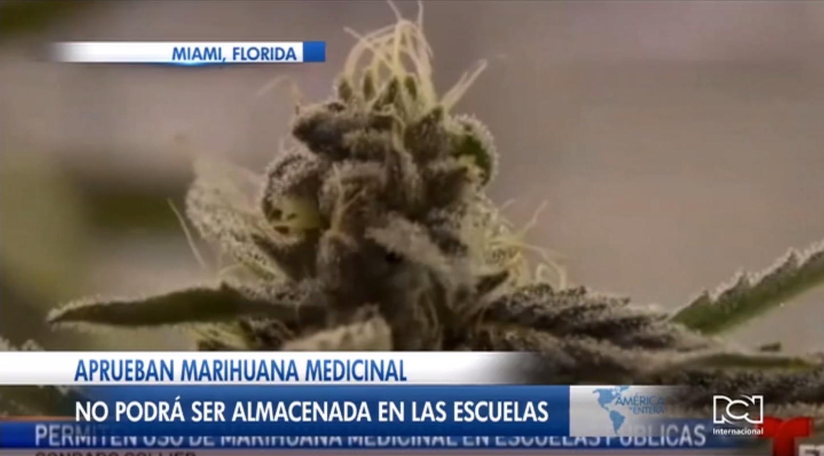 Autorizan el uso de marihuana medicinal en escuelas de Collier, Florida