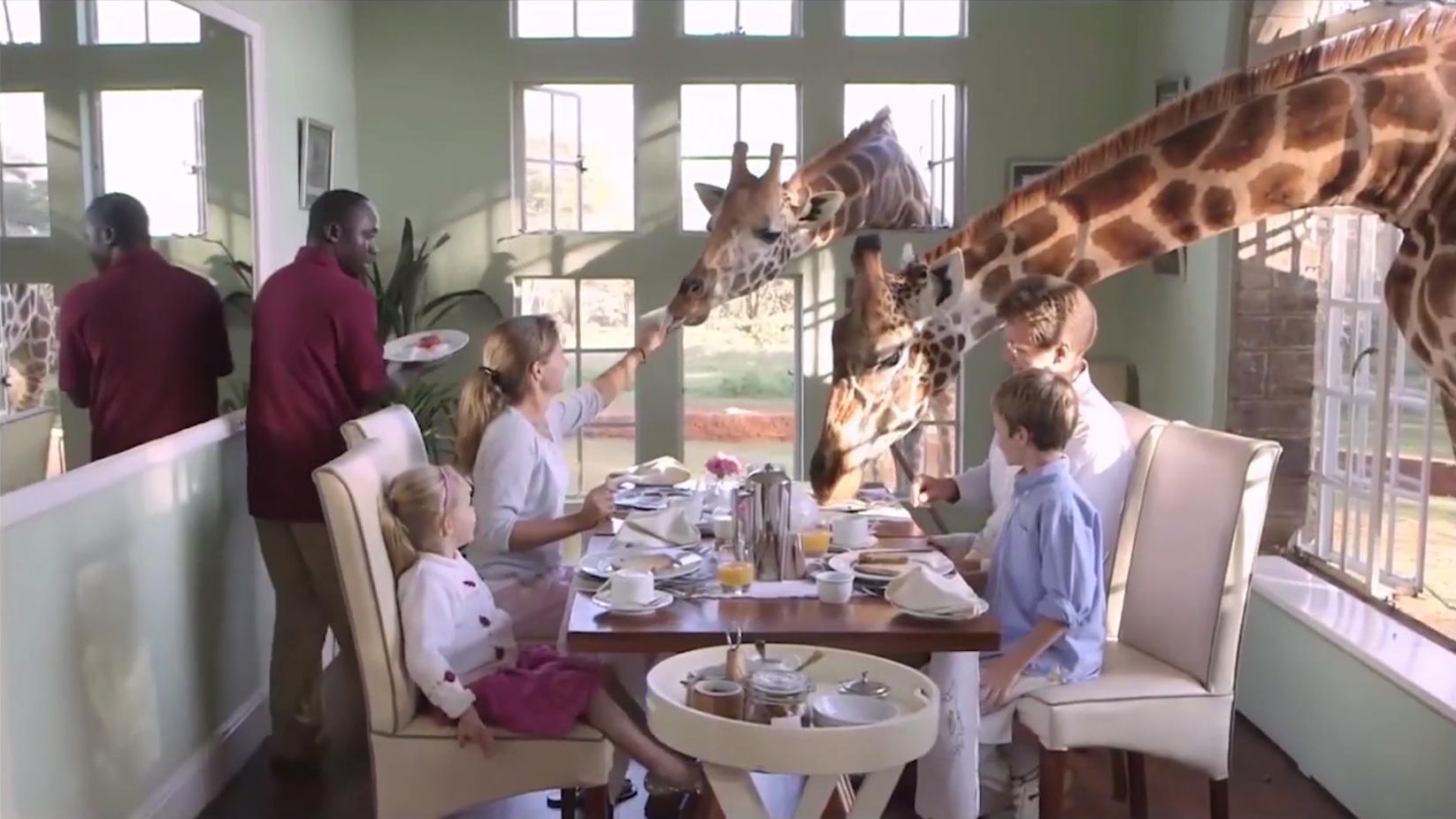 Las jirafas tienen su propio santuario en el Giraffe Center de Nairobi, en Kenia