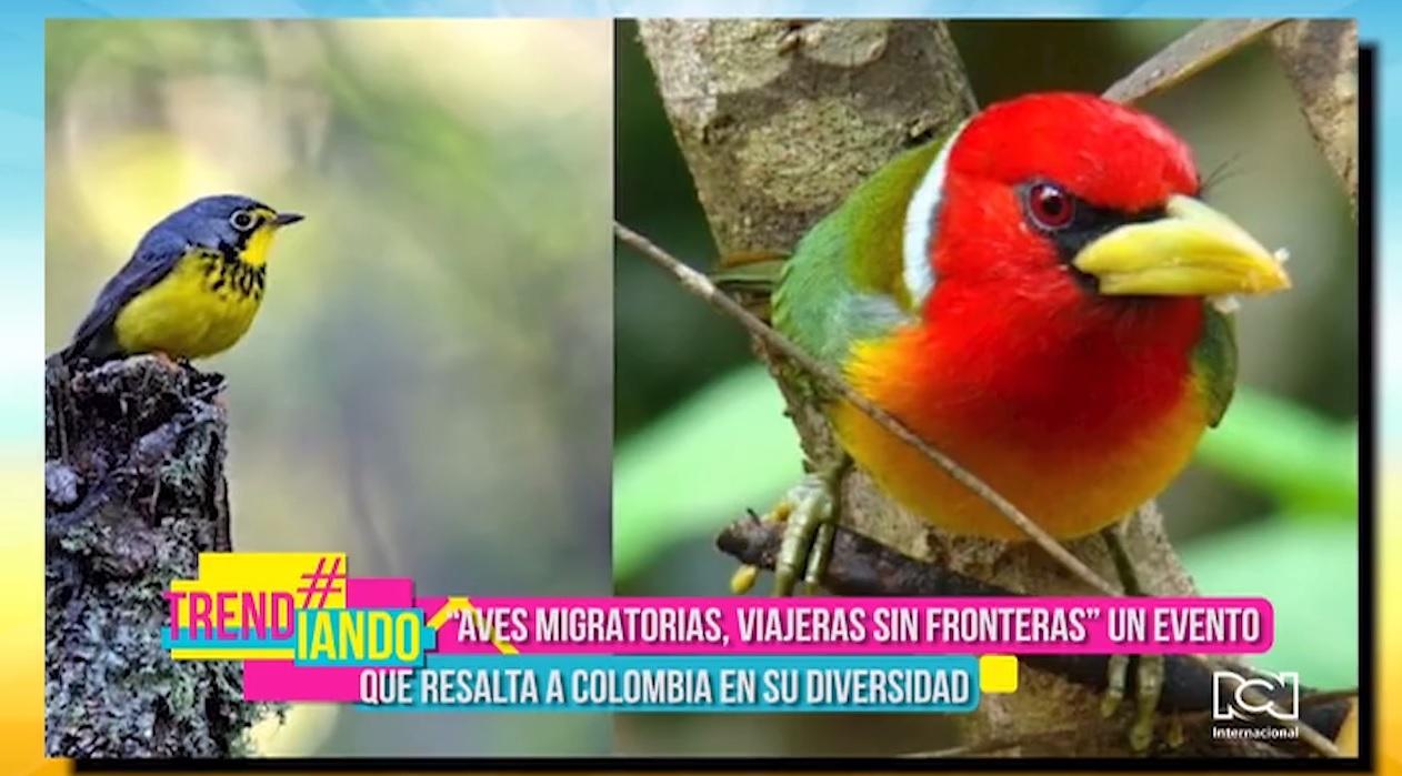 Feria Internacional de Aves de Colombia 2020