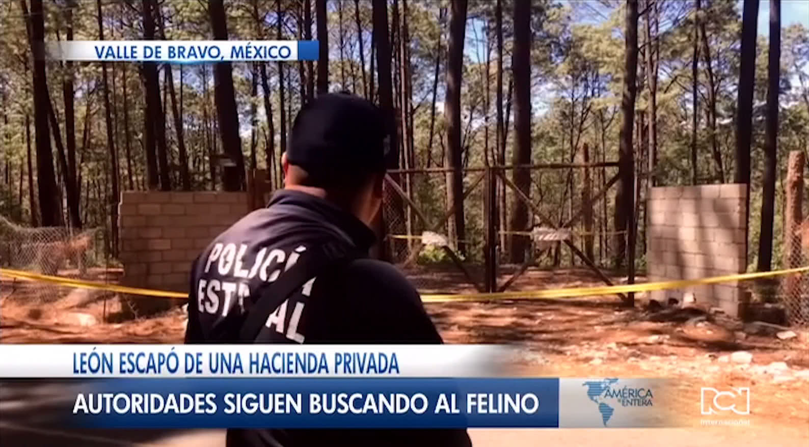 León suelto mató a una persona y tiene atemorizada a toda una población en México