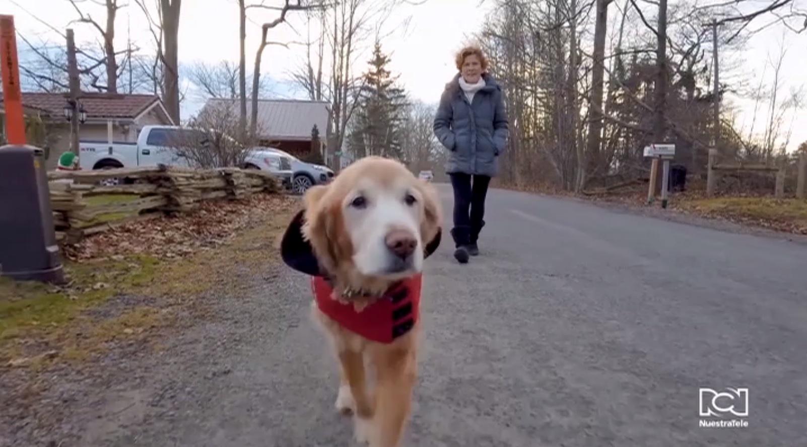 Consejos para cuidar a tu perro cuando el peludo se convierte en adulto mayor