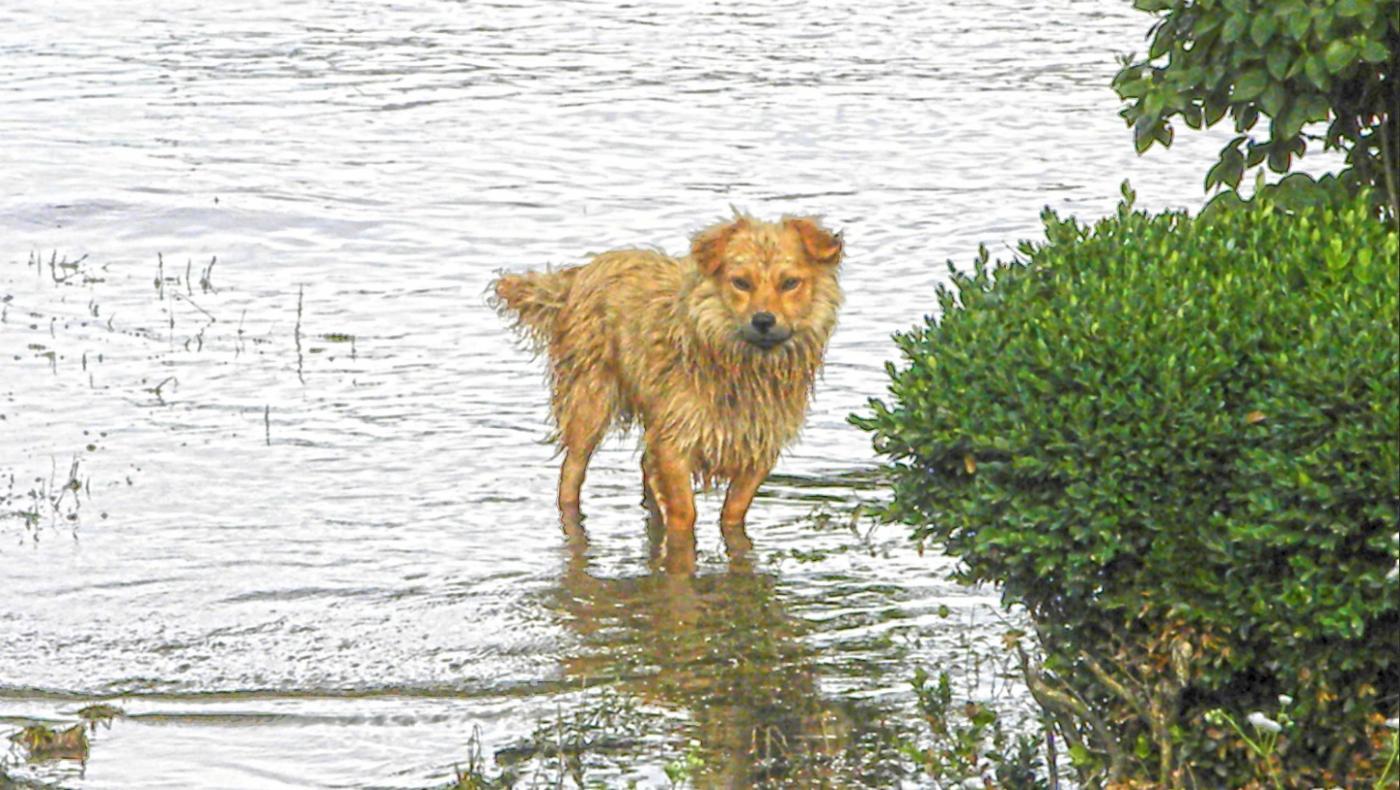 castigos-para-personas-que-abandonen-sus-mascotas-en-desastres-naturales-en-florida.jpg