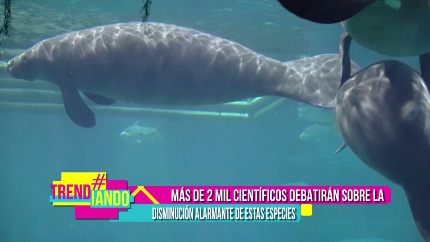 operacion-planeta-primer-congreso-mundial-de-mamiferos-marinos-barcelona-.jpg