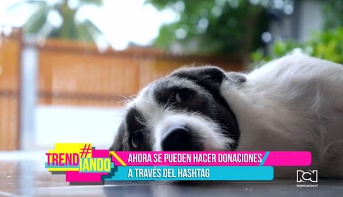 Etiqueta miércoles de mascotas se toma las redes sociales en Colombia