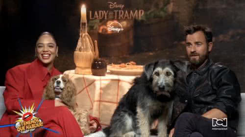 Perros adoptados protagonizan la película 'Lady and the Tramp', que esta semana llegó a la pantalla de Disney +