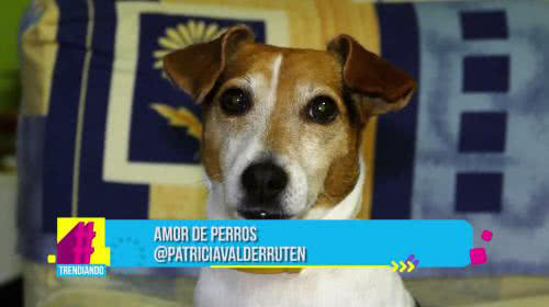 Amor de Perros: Conoce las estadísticas de los perros más comprados a nivel mundial