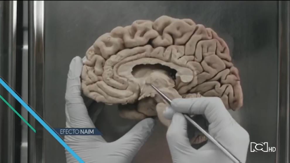 Efecto Naím | Capítulo 29 | Decodificando el cerebro