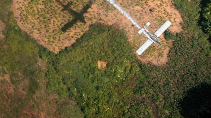Cultivos ilícitos en Colombia llegaron a 209.000 hectáreas