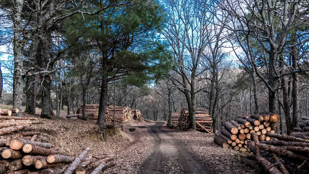 Extinción árboles