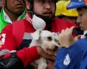 Mascotas rescatadas de entre las ruinas. Foto:Captura de vídeo NoticiasRCN