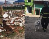 Una y Max hacen parte de los 11 perros rescatistas de los Bomberos de Bogotá. Foto:Capturas de vídeo Alcaldía de Bogotá