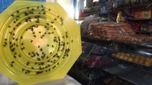 Hay un gran número de moscas en los comercios de la zona, según la denuncia. Foto: RCN