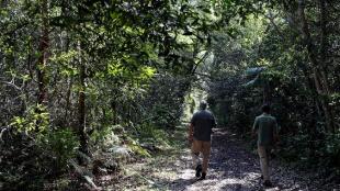 Los Everglades: El lado salvaje de la Florida que muy pocos conocen