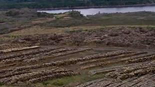 El cementerio de árboles más grande del Huila