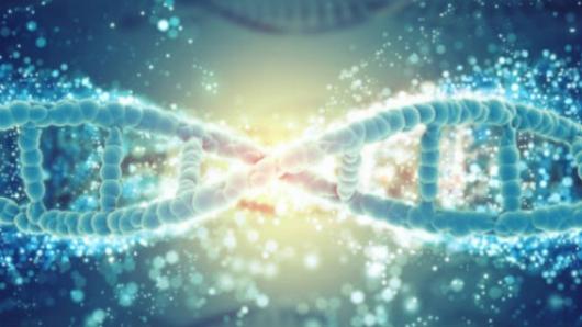 Corrigen en embriones la mutación que causa una dolencia cardiaca hereditaria