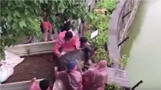 Zoológico alimenta a tigres con un burro vivo — China