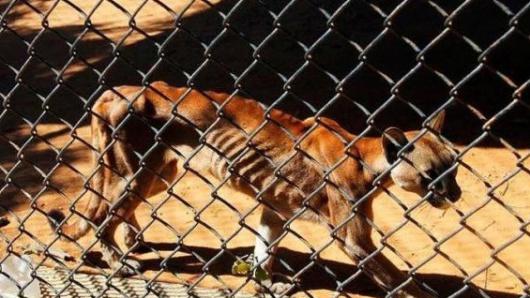 Animales sufren de desnutrición severa en zoológico de Venezuela