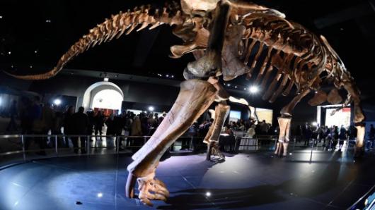 Dinosaurio descubierto en Chile podría ser el eslabón perdido entre dos especies