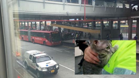 Paquete sospechoso en Transmilenio resultó ser un gato