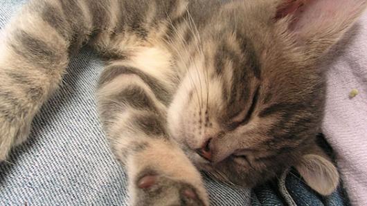 Compañía adopta gatos para combatir el estrés de sus empleados [VIDEOS — YouTube