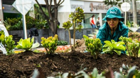Vamos a arborizar a Bogotá\