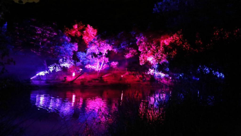 Descanso Gardens Se Convierte En Un Bosque Encantado Con 39 Enchanted Forest Of Light 39 Noticias Rcn