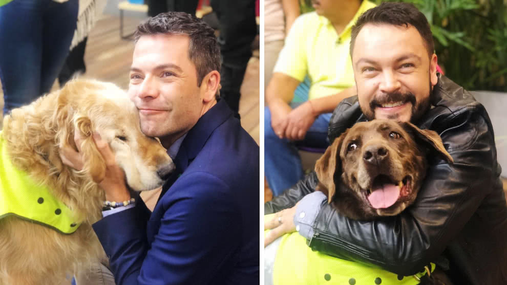 Adopta un héroe: la campaña de la Policía Nacional para darle un hogar a perros pensionados