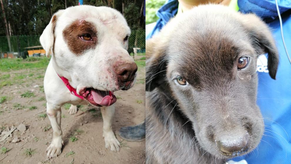 Cachorros de la Fundación Ángeles Sanando Huellitas buscan una Navidad diferente