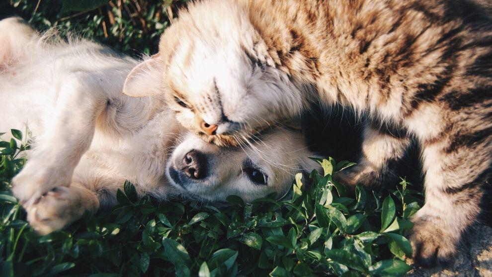 Viernes de pelos: Enfermedades en mascotas adultas