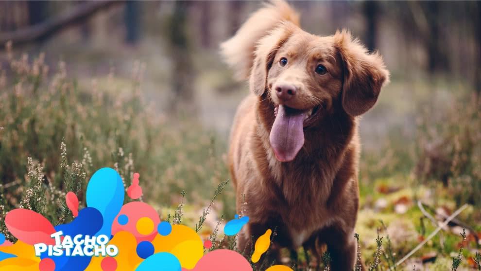 Tacho Pistacho - Cuando adopto a un perrito, ¿qué cuidados debo tener?