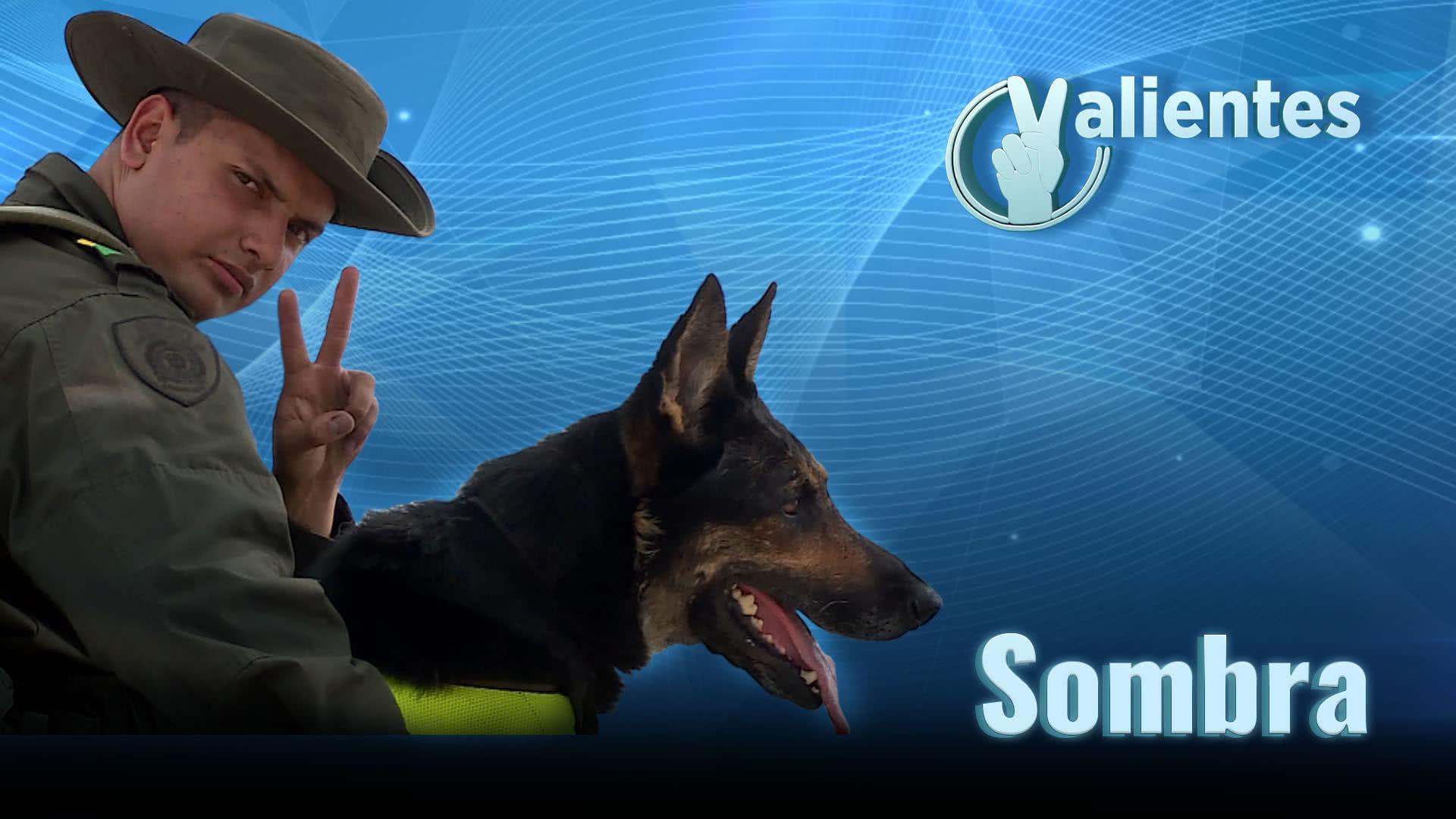 Sombra, la oficial canino terror del narcotráfico