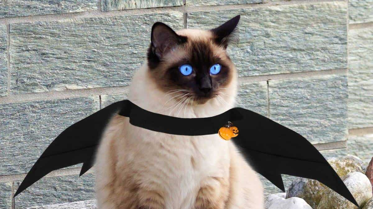Los mejores disfraces para gatos en este 2021